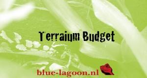 Blue-Lagoon-Terrarium-Budget