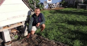 Eco Thrifty Living: Nelson Lebo's Super-productive home garden